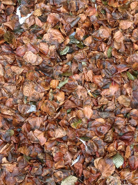 Leaves (Kaleidoscopic)