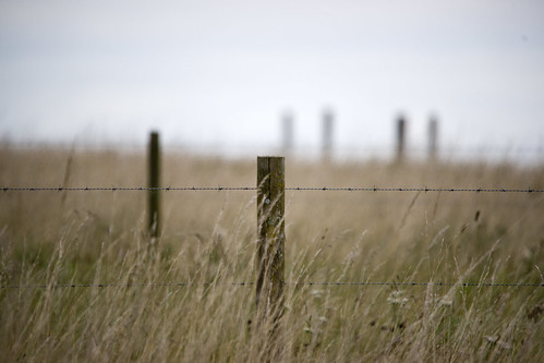 Posts and Wire by stevedewey2000