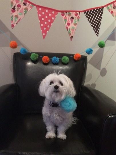 happy birthday, Rigby!
