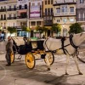 Seville Jan 2016 (12) 409 - Waiting for evening fares