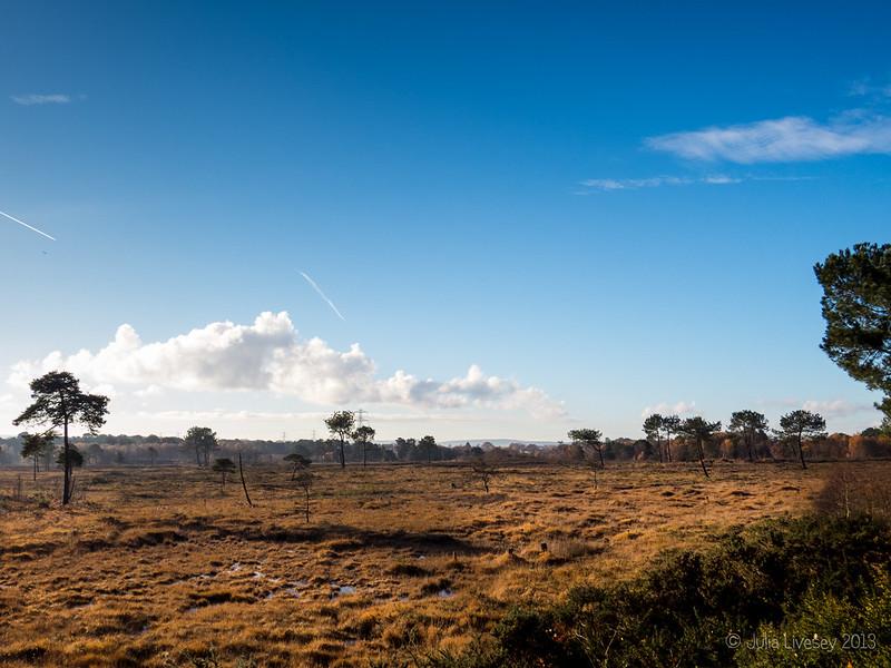 December sun on Upton Heath