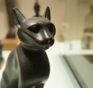 Met - Black Cat