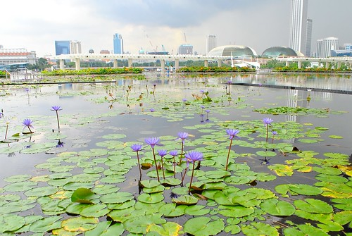 Art Science Museum - Lily Pad