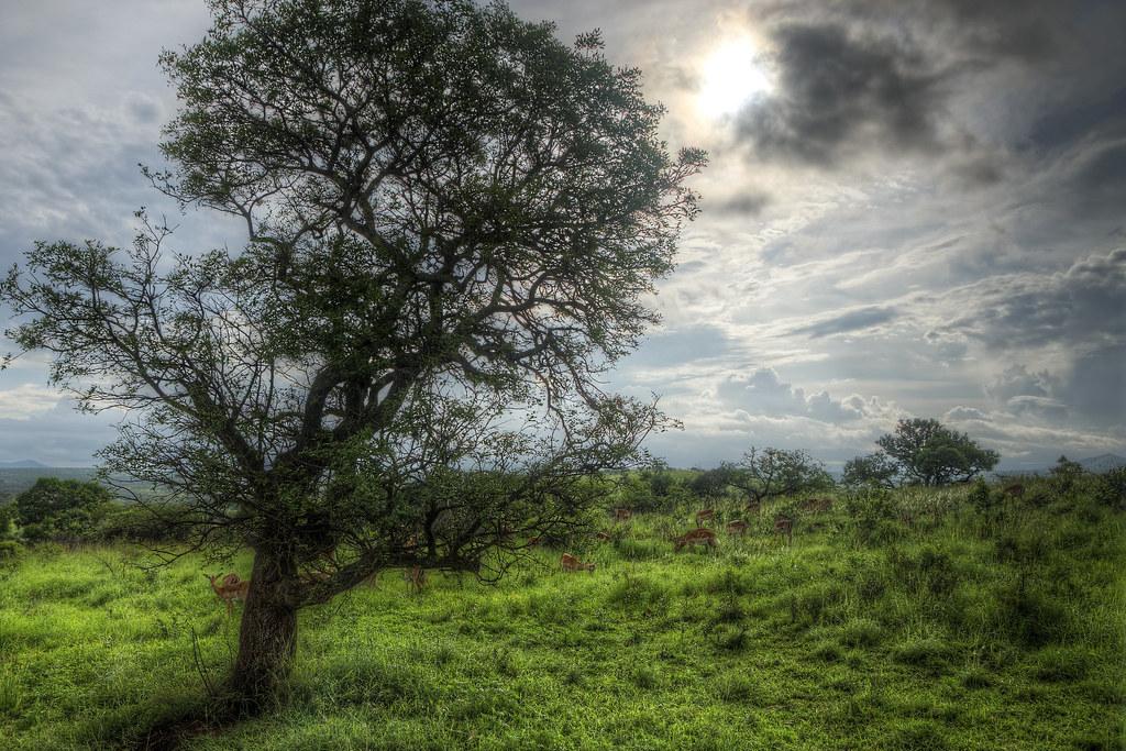 Hillside in Eden