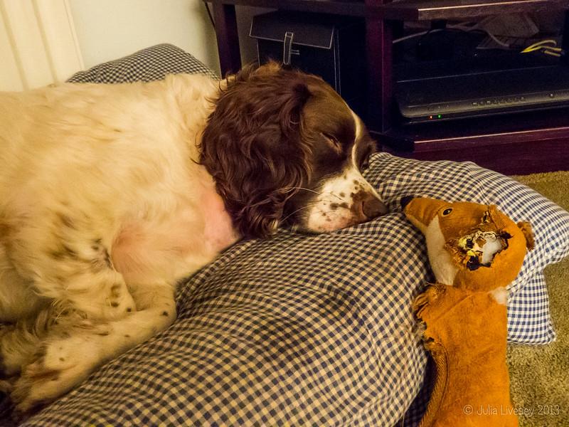 Foxy comes to check on a sleepy Max