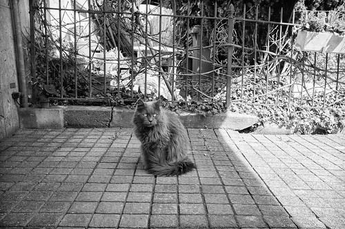 The Cat by ontourwithben