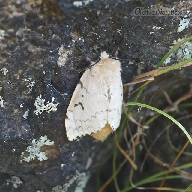 moth 0000 Harriman State Park, NY, USA