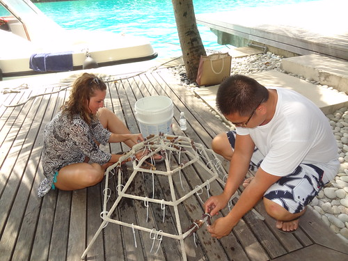 Attaching coral fragments to a frame to be placed among the Reethi Rah House Coral Reef