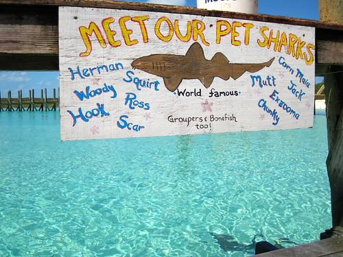 Pet sharks