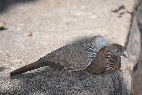 cute dove couple