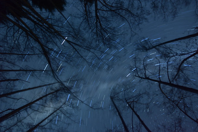 Forest silhouette, star trail
