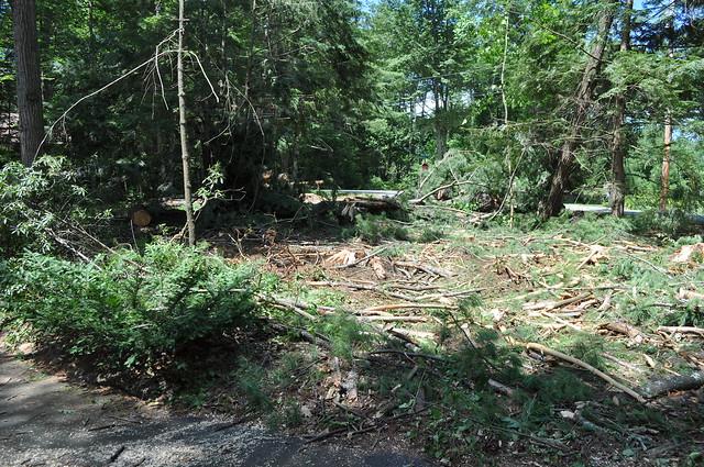 Logging Devastation