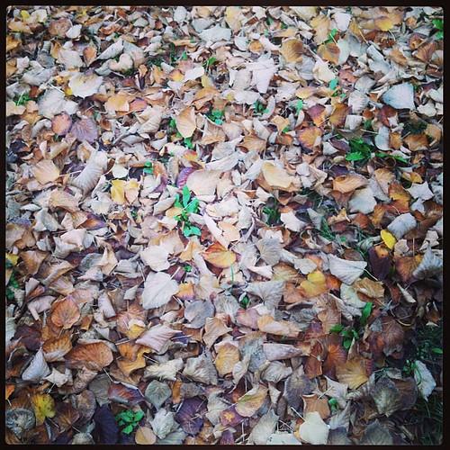 Tappeto di foglie, l'autunno ha arredato il viale #giriingiro #viaggioinromagna #igersfc #fall #autunno #autumn