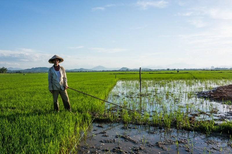 2013-06-09 Planting Rice - DSC05179-FullWM