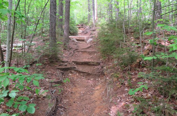 Hale Brook Trail Climb