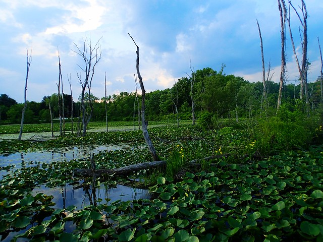 CVNP Beaver Marsh
