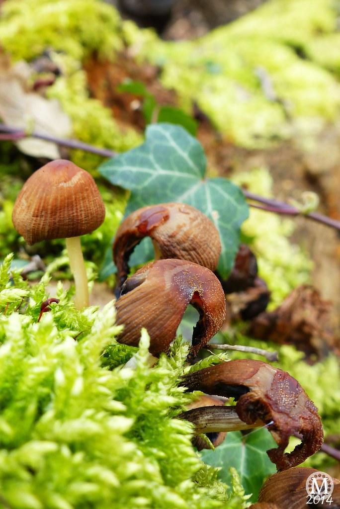 Fungi in Bedford's Park