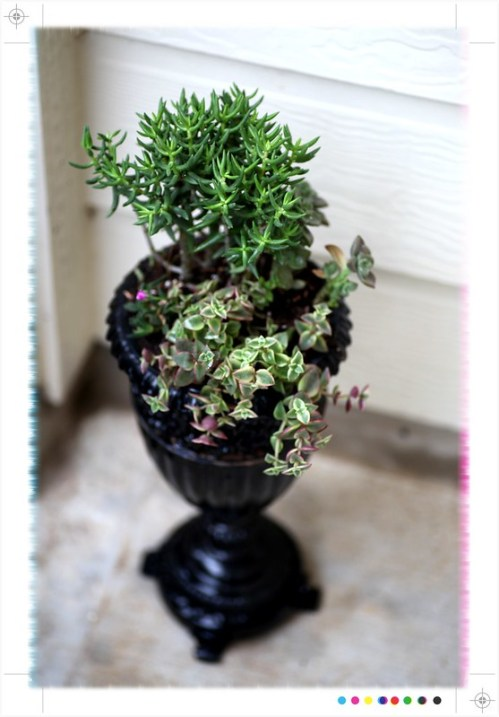 Mixed succulent plant collection in Urn by Sprittibee.com