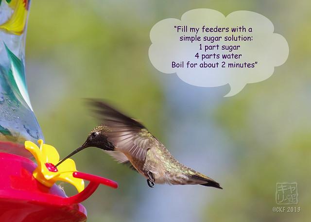 Hummingbird Dialogue 2