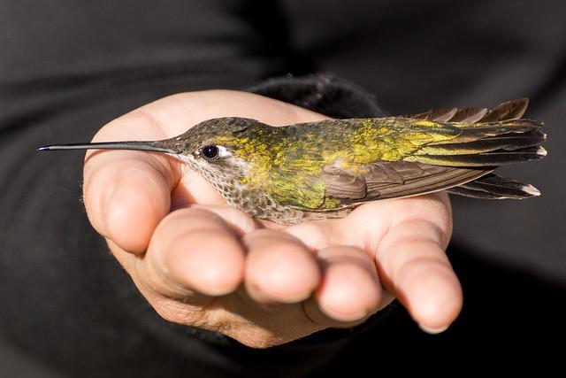 1306 Alison holding a Hummingbird
