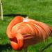 Bird Nap