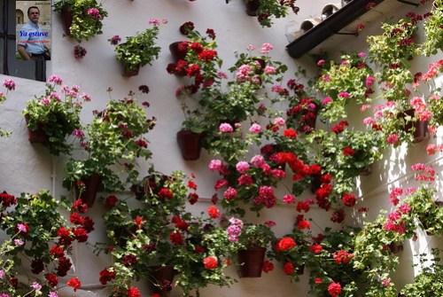 Flores en los patios de Córdoba