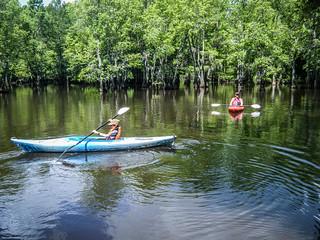 Sparkleberry Swamp (3 of 25)