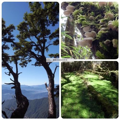 豐富的植被與林相