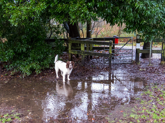 The entrance to Upton Heath is a bit wet and muddy