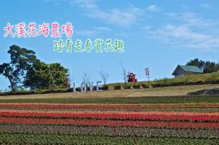桃園大溪|大溪花海農場-走春踏青賞花趣