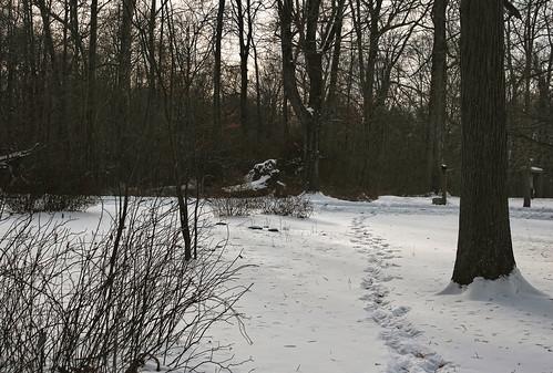 Footpath: Dawes Arboretum in Winter