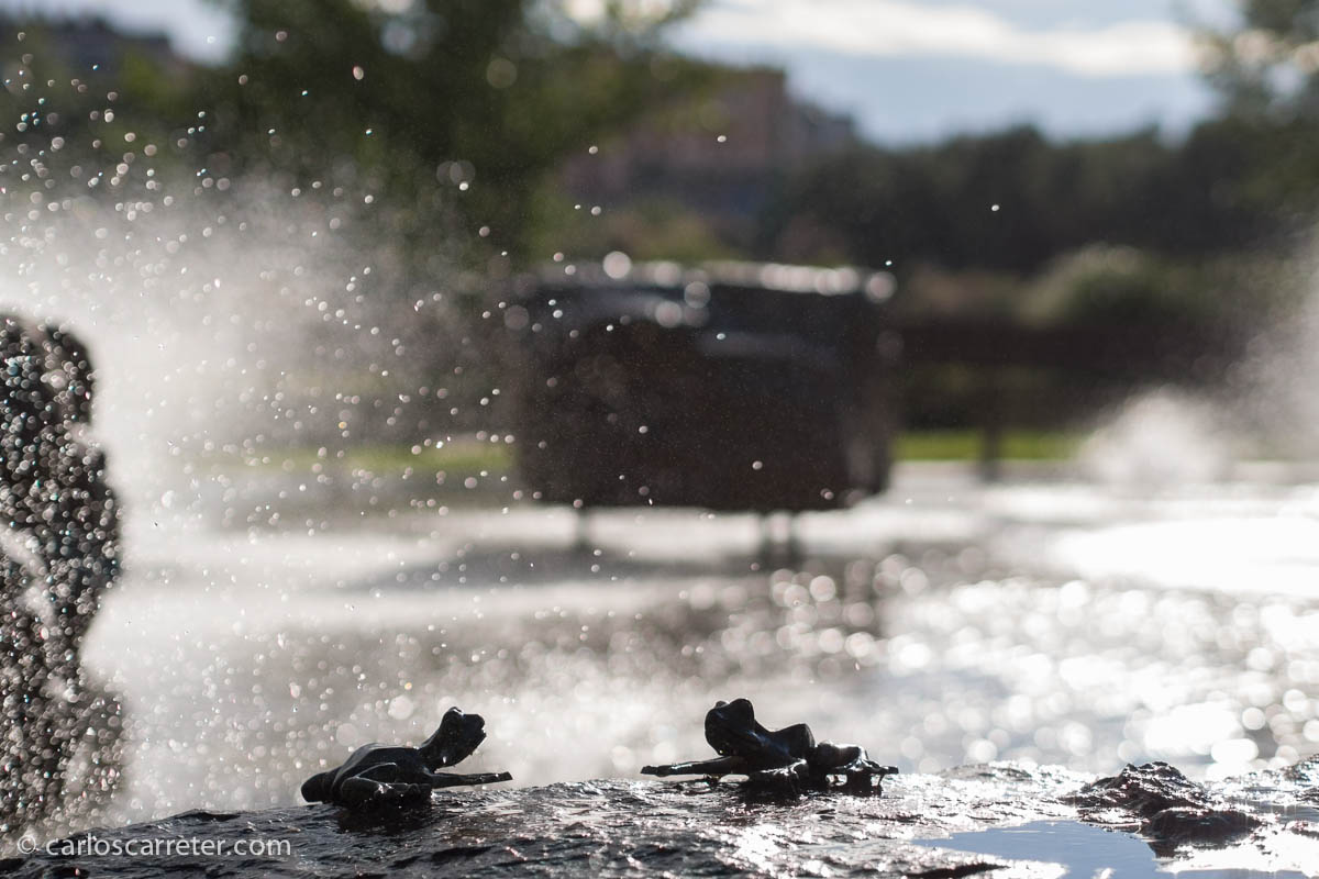 Diálogo de ranas