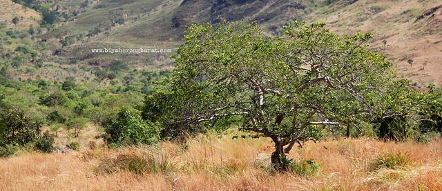 Tree Nagsasa Cove Zambales