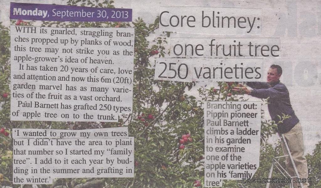 30-09-2013 Apple Tree Back