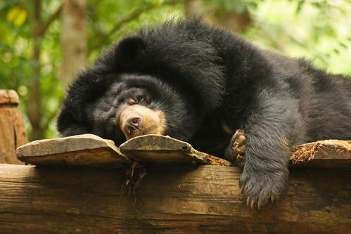 I is sleepin