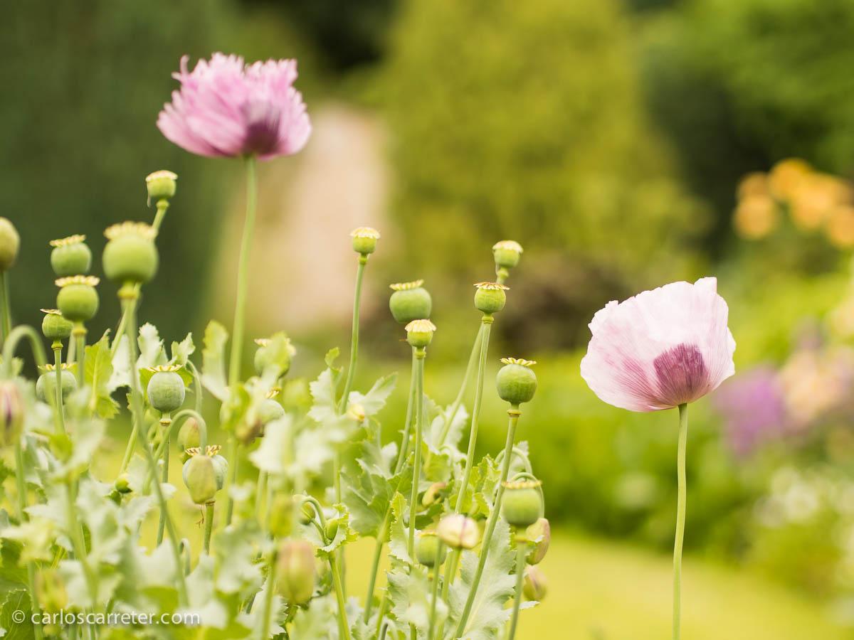 Jardín privado abierto por una buena causa