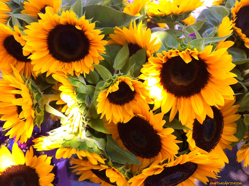 carlsbad_sunflowers_web