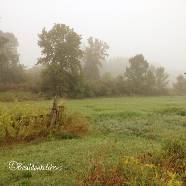Aug 27 - 10 minutes from home {this morning is foggy but very pretty} #fmsphotoaday #field #CtyRd1 #princeedwardcounty #fog #weather #rural #trees