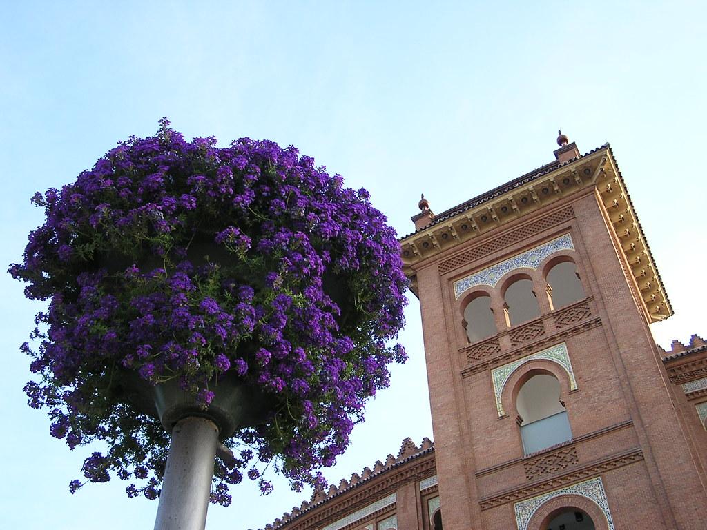 Madrid flores 37
