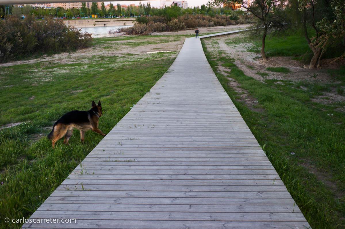 Ribera del Ebro en la Almozara