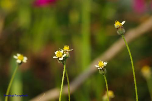 Hoa dại tháng 3