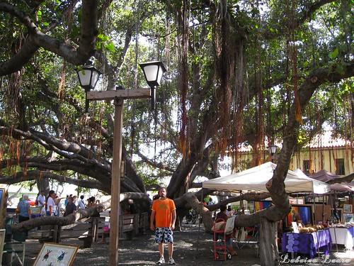 Center of the Banyan Tree May 11th ❤