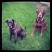 Vega and Moose