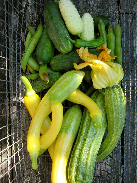 8.5.13 Mid-Summer Harvest