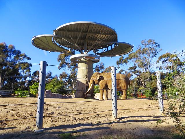 San Diego Zoo 17