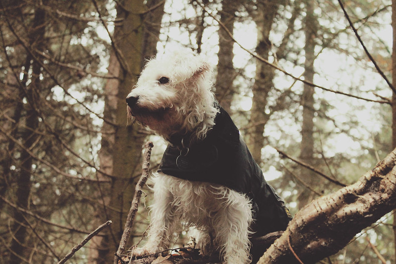 Dog Barbour jacket