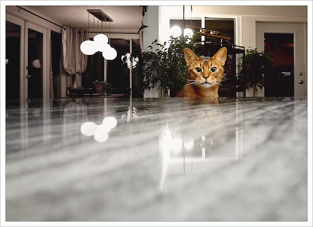 45-52-2014: Where's Dinner?