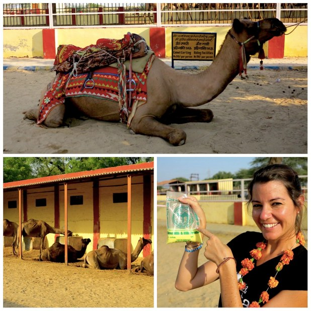 Centro Camellos Bikaner