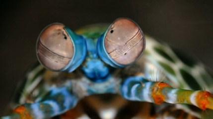 ShrimpEyes_large