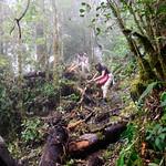 01 Viajfilos en Panama. Sendero Quetzal 58